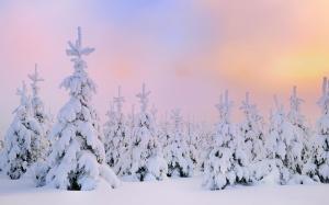 唯美冬季雪景图片