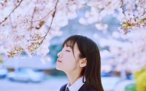 樱花树下纯洁漂亮校园女孩图片