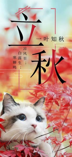 立秋可爱猫咪图片