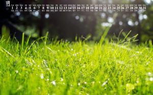 2019年1月绿色植物日历壁纸