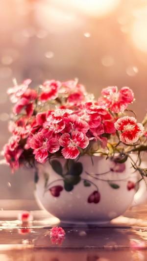 唯美盆栽植物手机壁纸