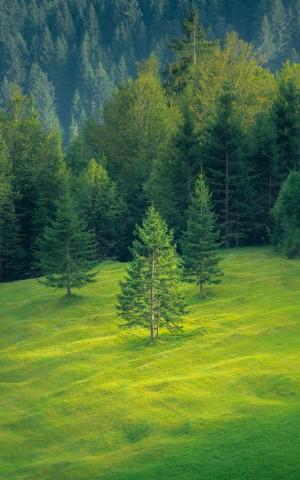 绿色的森林风光