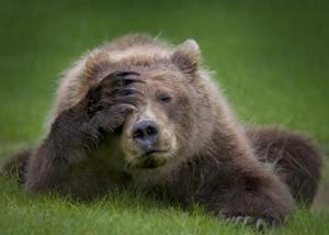 两只狗熊和一只老鹰的搞笑对话摄影