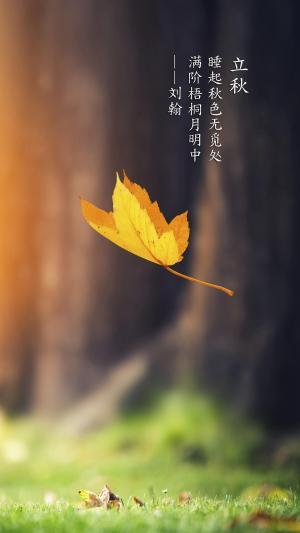 立秋时的落叶