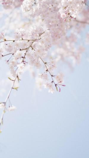 唯美浪漫樱花图片