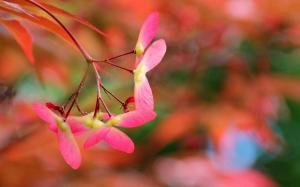 春分节气花朵植物图片