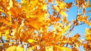 二十四节气之迷人的立秋