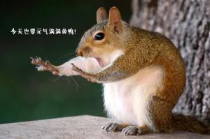 可爱野生小动物卖萌创意配字,搞笑可爱动物图片
