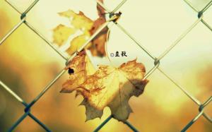 24节气之立秋图片
