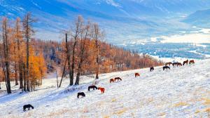 冬季雪景自然风光高清壁纸