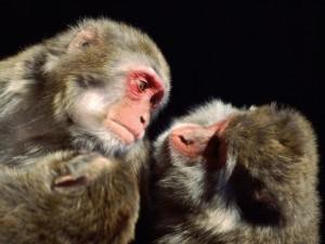 调皮的猴子图片