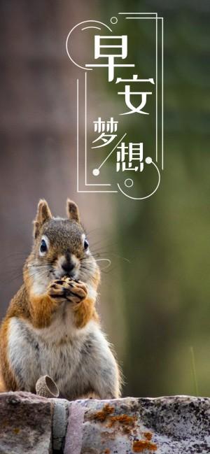 早安梦想之可爱的小松鼠图片