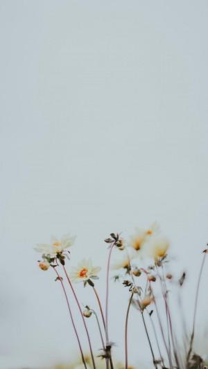 唯美迷人的秋英高清手机壁纸