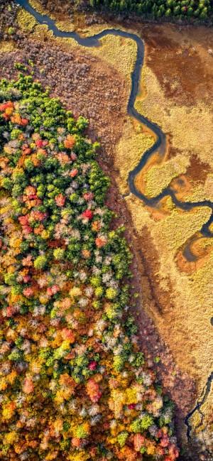 森林树木风景高清手机壁纸