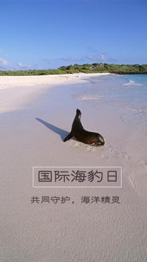 国际海豹日主题没有买卖,就没有杀害