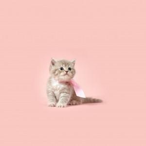 可爱呆萌的猫咪