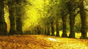 枫叶的传说,在枫叶落下之前就接住枫叶的人会得到幸运