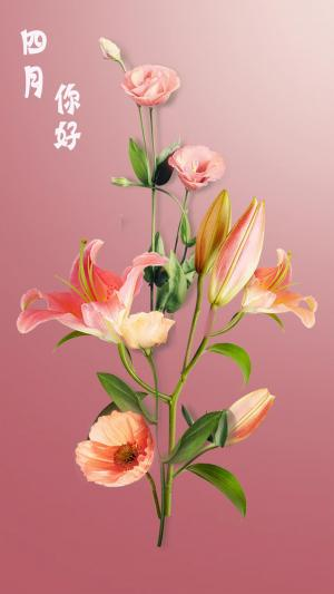 四月你好,花朵盛开,高清手机壁纸