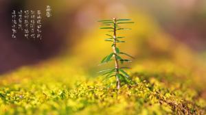 二十四节气之立春万物生长高清电脑壁纸