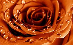 情人节巧克力的味道