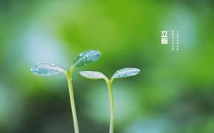 二十四节气立春清新绿植高清桌面壁纸