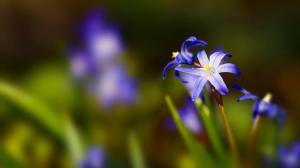 春天的鲜花绿草图片