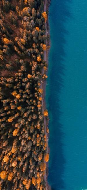 森林树木俯瞰视角高清手机壁纸