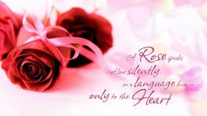 520表白日爱的红玫瑰
