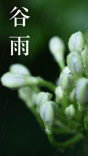 谷雨时节的花朵