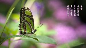 24节气惊蛰清新大自然图片