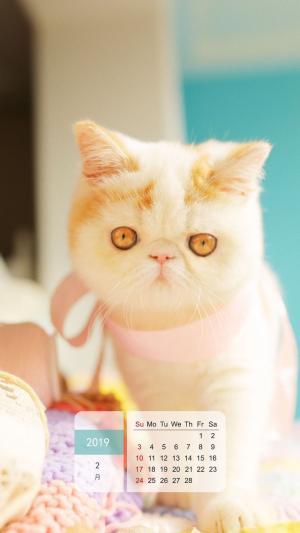 2019年2月可爱呆萌猫咪日历手机壁纸