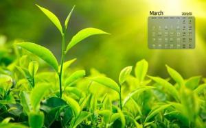 2019年3月护眼绿色嫩芽日历桌面壁纸