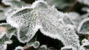 二十四节气之霜降季节秋叶结霜高清桌面壁纸