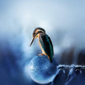 站在冰球上的翠鸟