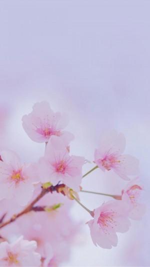 浪漫梦幻的日系樱花