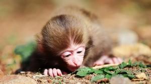 小猴子可爱摄影图片