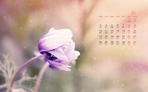 2019年6月小清新唯美淡雅植物写真日历