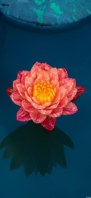荷花·莲花唯美高清手机壁纸