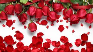 情人节玫瑰花礼物图片