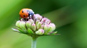 高清可爱瓢虫图片大全