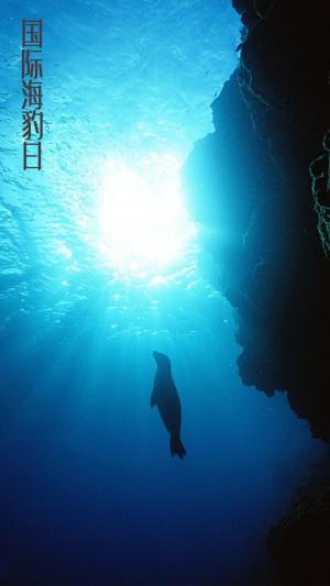 国际海豹日,请让这些精灵自由的畅游在大海