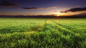 日出的阳光照在草地上