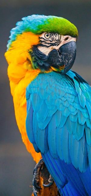 最漂亮艳丽的金刚鹦鹉