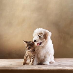 亲密的猫咪与狗狗