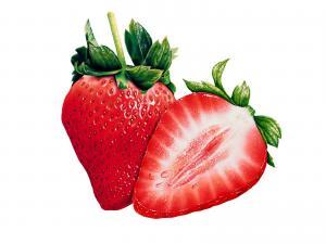 手绘水果 第一辑