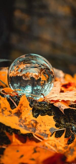 水晶球里的微观世界高清手机壁纸