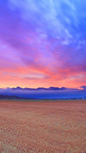 金色麦田里的晨光