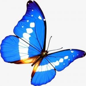 蝴蝶多彩高清桌面壁纸