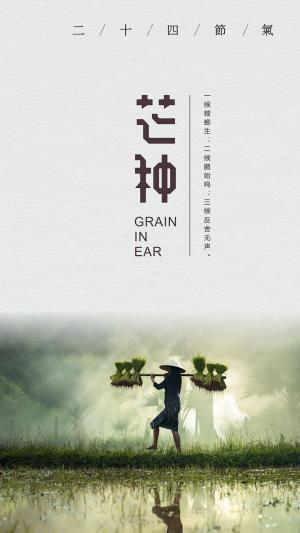芒种时节农民辛勤劳作海报