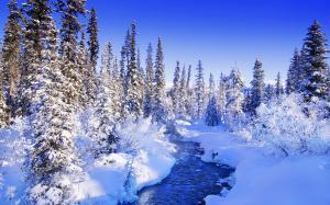 二十四节气之大雪蓝天白雪风景电脑壁纸